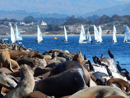 Animals, Sea Lions, Sailboat, Sea Animals, Seals
