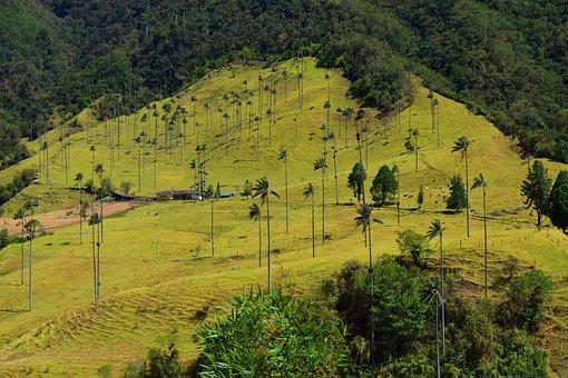 Valley, Cocora, Salento, Silhouettes, Palma, Mountain