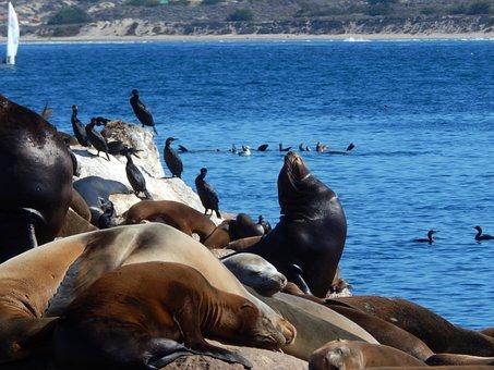 Animals, Sea Lions, Sea Animals, Seals, Sea Birds