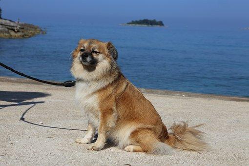 Dog, Beach, Sea, Vacations, Croatia
