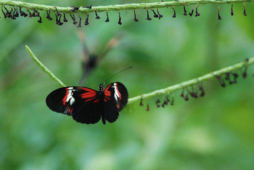 Butterfly, Red, Nature, Insect, Black