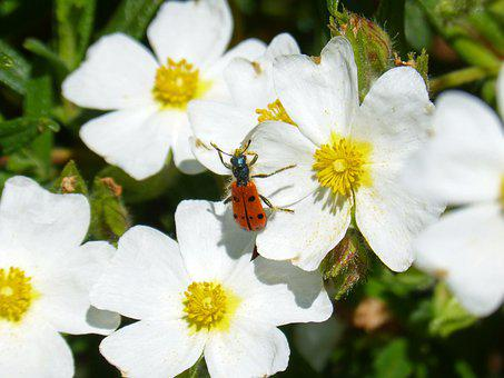 Flowers, White Steppe, Insect