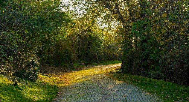 Path, Park, Sunny, Green, Summer