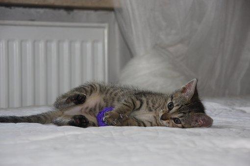 Cat, Dachowiec, Kitten, Animal, Animals, Favorite