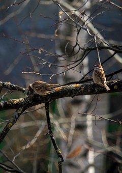 Sparrow, Birds, Bird, Plumage, Pen, Garden, Birdie