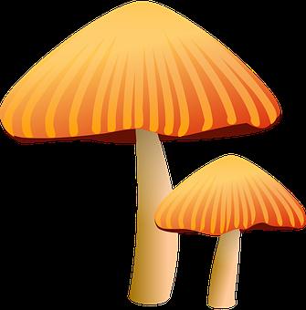 Mushrooms, Brown, Toadstool, Fungus