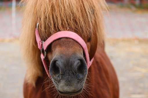 Pony, Brown, Horse, Hairstyle, Halter, Cute, Pasture