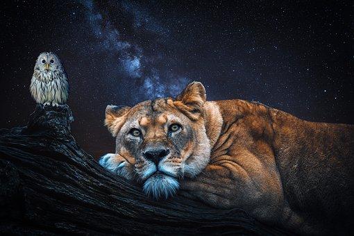 Lion, Owl, Night, Log, Animal World