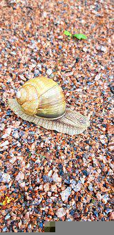 Snail, After The Rain, Nature