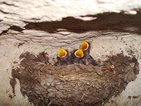 Chicks, Jack, Birds, Nature, Beak, Young