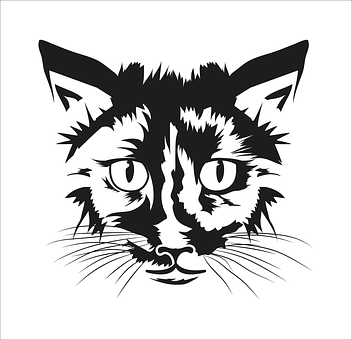 Cat, Animal, T, Pet, Head, Kitten, Nature, Attention
