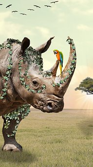 Rhino, Manipulation, Photomanipulation, Parrot, Animals