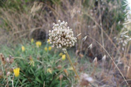 Vegetation, Plants, Nature, Plant, Grass, Green, Botany