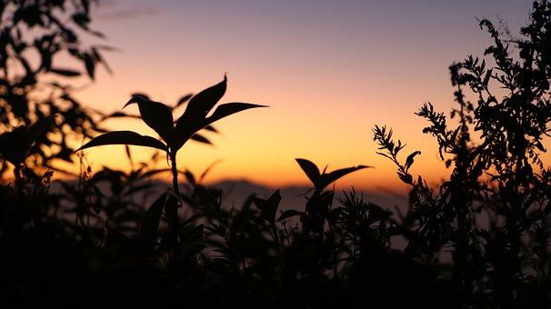 Sunset, Golden, Sun, Sky, Nature, Light