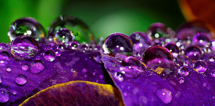 Drop Of Water, Color, Close Up, Wet, Macro, Garden