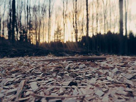 Forest, Floor, Wooden, Nature, Ground