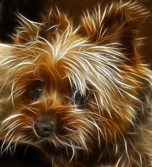 Dog, Terrier, Animal, Edited, Image Editing, Sharpness