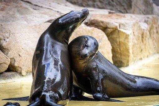 Seals, Zoo, Robbe, Water, Meeresbewohner