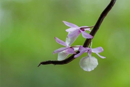 Royal Workshops, Orchids, Flower, The Garden