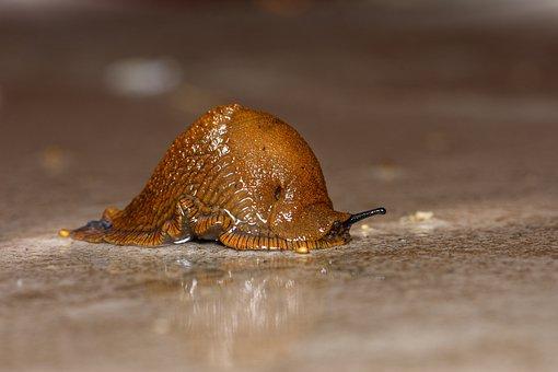 Slug, Ticks, Mollusk, Mucus, Slowly, Crawl, Probe