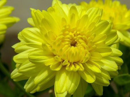 Yellow, Nature's Yellow, Spring, Nature, Flower
