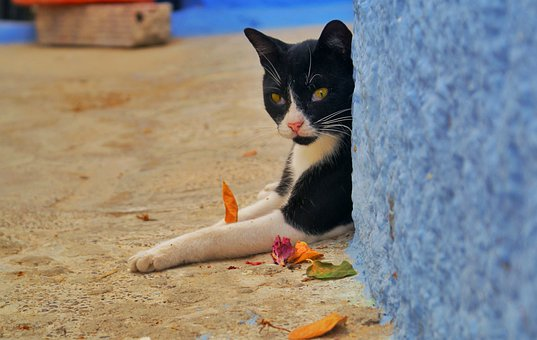 Cat, Cats, Catlover, Catlovers, Catlife, Cats Of World