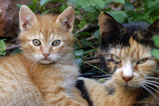 Cats, Animals, Feline, Fur, Kitten, Place, Ground