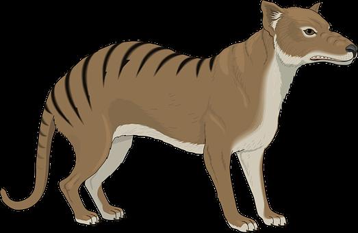 Angry, Stripes, Strange, Animal, Tail, Growl, Growling