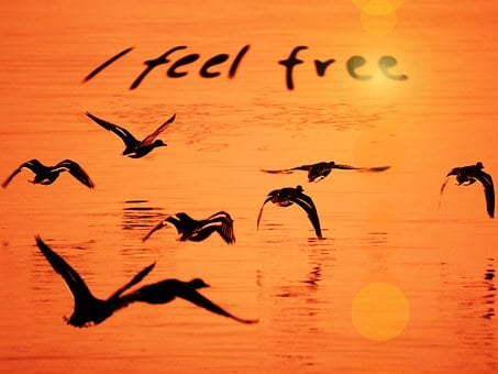 Seagull, Water, Orange, Free, Freedom, Feeling, Lake