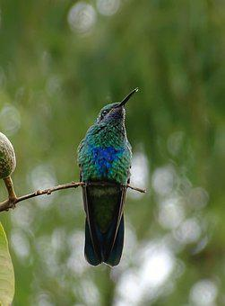Naturaleza, Bogota, Colombia, Pajaro, Ave, Humedal