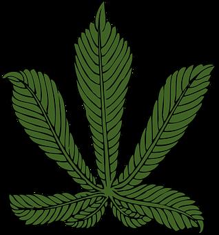 Chestnut, Leaf, American Chestnut, Beech, Leaves, Green