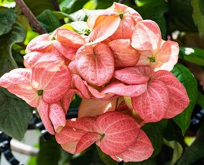 Flowers, Nature, Summer, Garden, Blossom, Bloom, Plant