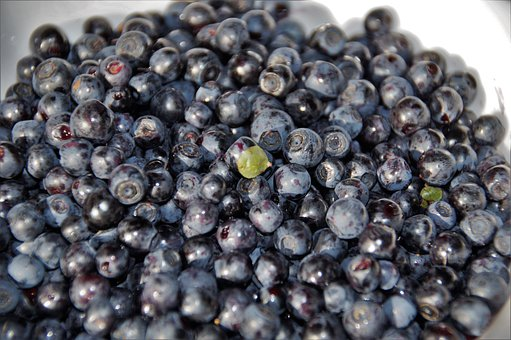 Blueberries, Forest, Fruits, Berry, Blue