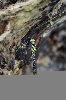 Dragonfly, Branch, Insect, Nature, Wing
