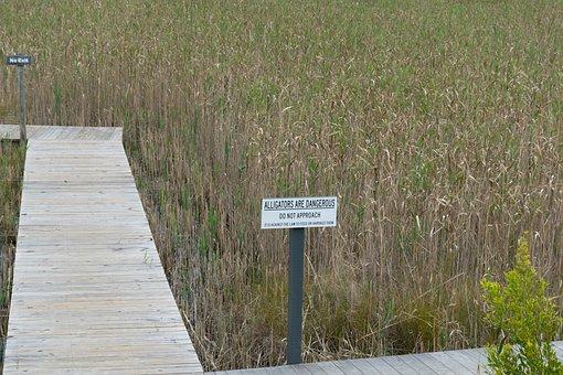 Alligators, Walkway, Path, Bridge, Nature, Grass