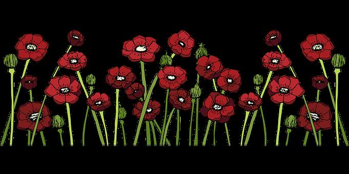 Poppy Fields, Poppy Flower, Red Flower, Red, Nature