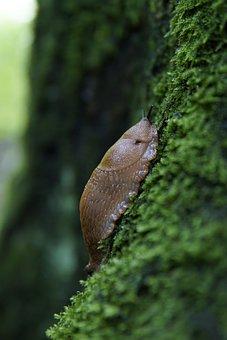 Slug, Snail, Moss, Forest, Tree, Wet