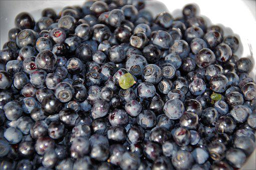 Blueberries, Forest, Fruits, Berry, Blue, Vit, Vitamins