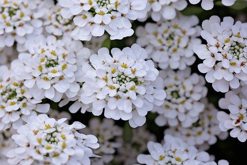 Arboretum, Spring, Flowering, Park