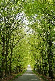 Forest, Skovvej, Beech, Trees, Beeches, Landscape