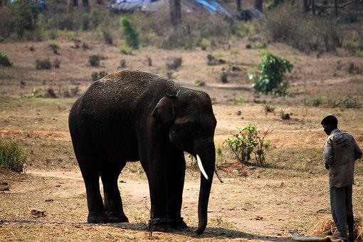 Tamed Elephant, Elephant Mahout