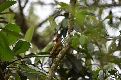 Ave, Animals, Nature, Birds, Mexico, Carpenter, Fauna