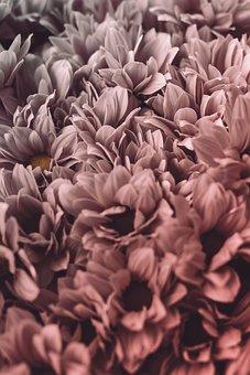 Flower, Background, Floral, Plants