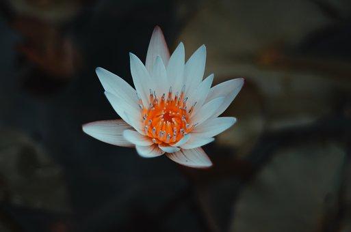 Flower, Tulip, Spring, Garden, Nature, Bloom, Colorful