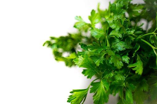 Parsley, Green, Herbs, Healthy, Plant, Food, Eat