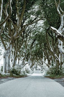 Ireland, The Dark Hedges, Beech, Trees