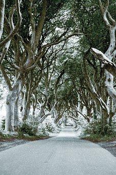 Ireland, The Dark Hedges, Beech, Trees, Winter, Snow