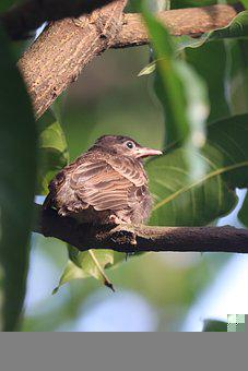 Bird, Nature, Branch, Wildlife, Relaxing