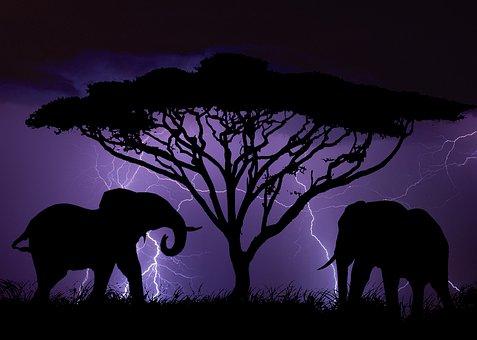 Silhouette, Elephant, Africa, Animal, Nature, Wild