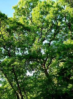 Green Trees, Green, Tree, Forest, Nature, Trees